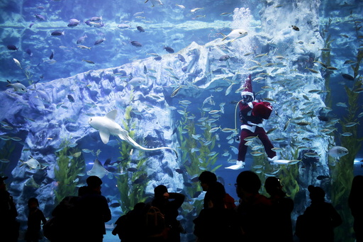 A diver dressed in a Santa Claus costume performs during an event celebrating the upcoming Christmas holiday at Lotte World Aquarium in Seoul