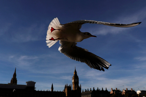 A seagull flies past the Houses of Parliament in central London
