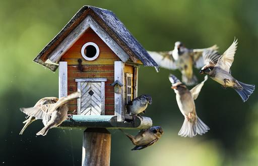 Sparrows fly around a bird feeder in Putgarten