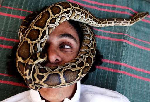 Palestinian man Nabeel Mussa, who keeps scorpions and snakes as a hobby and eats them, has his face surrounded by a snake at his house in Riyadh