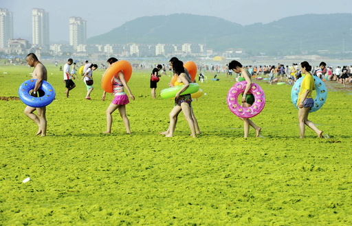Swimmers walk with their floats on a beach covered by algae, in Qingdao