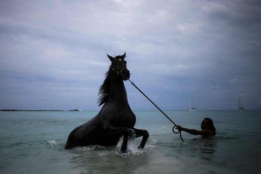 A handler baths a horse from the Garrison Savannah in the Caribbean Sea near Bridgetown, Barbados