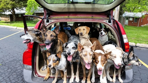 Officers Respond to Call and Find Dogsâä¦ Lots of Dogs!