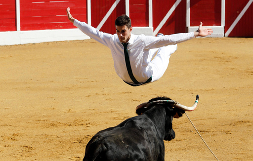 A competitor jumps over a cow during a Course landaise in the Landes region in Aignan