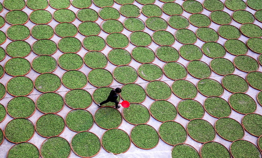 A woman walks in a yard where tea leaves are dried at a tea company in Dening
