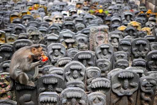 A bonnet macaque sits on consecrated idols of snakes as it eats a pomegranate fruit left behind as an offering by devotees during the Nag Panchami festival inside a temple on the outskirts of Bengaluru