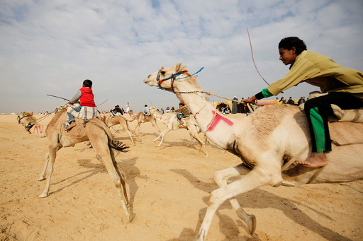 Jockeys, most of whom are children, compete on their mounts during the opening of the International Camel Racing festival at the Sarabium desert in Ismailia
