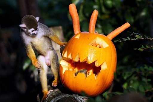 Halloween surprise in the zoo
