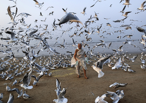 A man feeds seagulls on a beach along the Arabian Sea in Mumbai