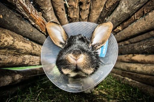 Sick rabbit in Frankfurt am Main