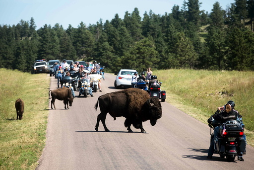 Touring bikers participate in the annual Sturgis Motorcycle Rally in Custer State Park