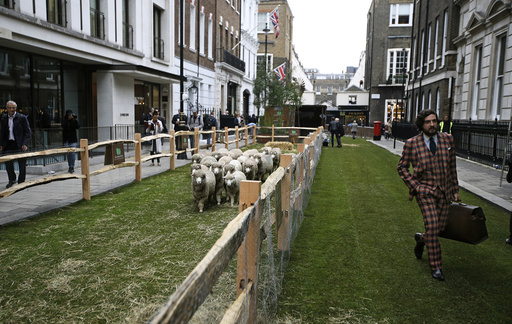 A man walks past a flock of Exmoor Horn sheep in Savile Row London