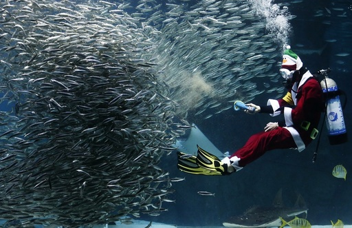 Santa Claus divers perform at Coex Aquarium in Seoul