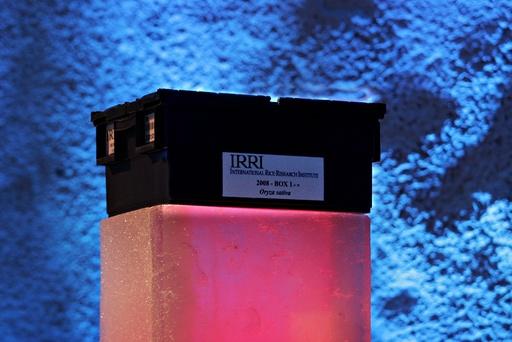 Frøbanken. Den første boksen med frø som blir plassert i Frøbanken, Longyearbyen, Svalbard