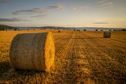 Kornbonden er frifunnet for å ha smuglet tonnevis av korn over grensa. Illustrasjonsfoto Foto: Heiko Junge / NTB