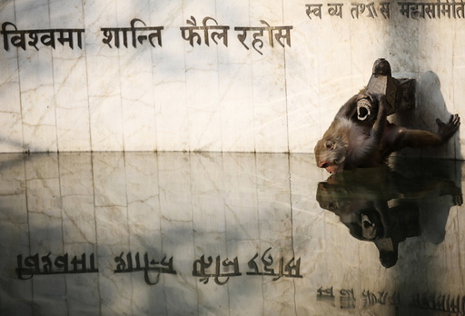 A monkey is reflected on a pond while drinking water in Kathmandu
